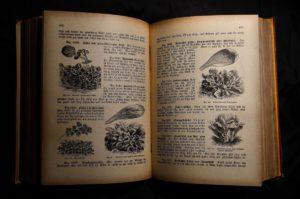 Choisissez un bon livre de cuisine