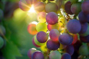 Raisins, Sun, Rayon De Soleil, Fruits